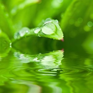 Counselling and Psychotherapy. dewdrop